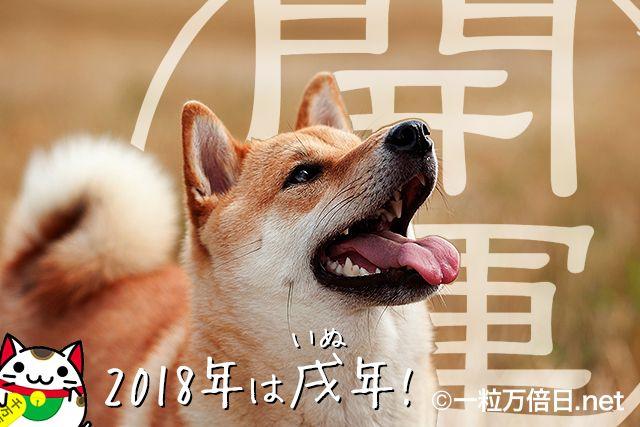 縁起の良さそうな柴犬と招き猫 - 開運祈願 -